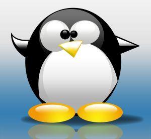 Hosting Windows Vs. Linux.